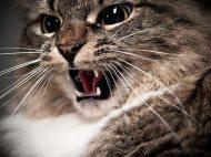 123051625-cat-agression-part-2-632x475